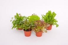 Mix Blattpflanzen