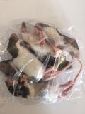 junge Ratten ca. 20 Tage Inhalt: 10 Stück