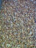 Mehlwürmer Inhalt: ca. 50 g